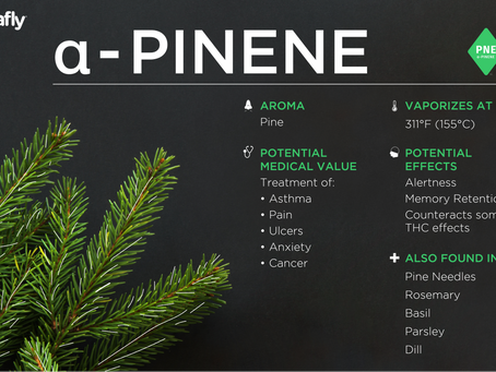 Lets Talk cannabis terpenes.  Alpha-pinene