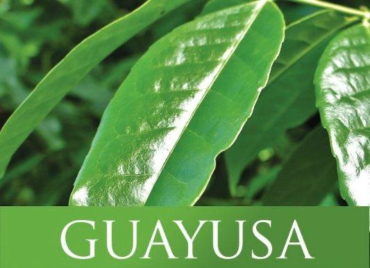 guayusa.jpg