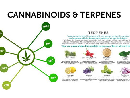 'Entourage Effect'. How Cannabinoids And Terpenes Work Together Learn what is the ' Entourage Effect