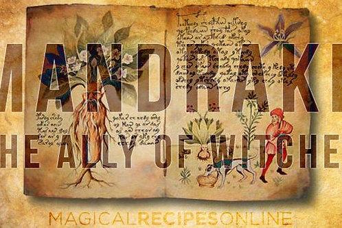 Magical Mandrake Root Powder Smoke or Tea 5GMS