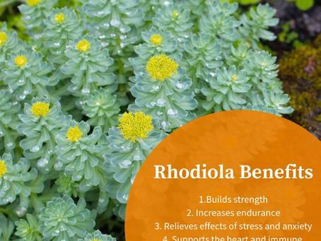 Rhodiola Rosea - Kratom Altrnative for Energy