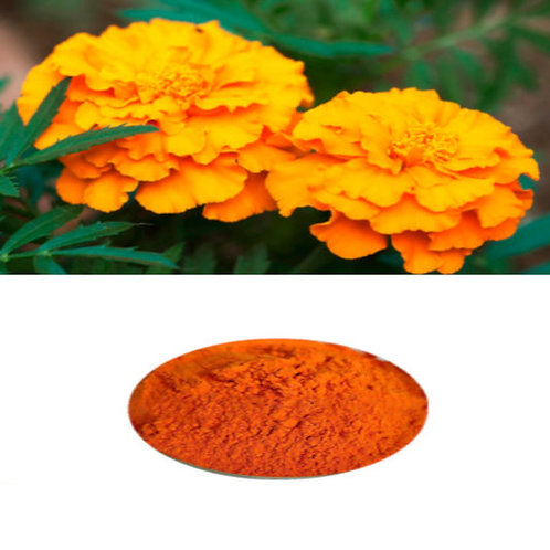 100.1 Mexican Tarragon Tagetes Lucinda  Euphoric Enhances CBD