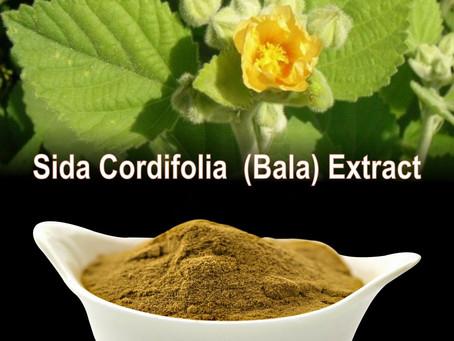 Sida cordifolia - Bala  A  Legal ephedrine