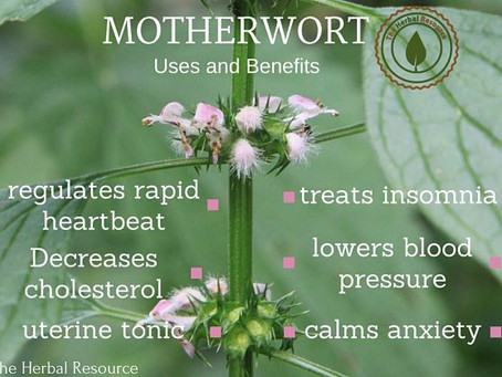 """The plant goes by many names, including siberian motherwort and marihuanilla, """"little marijuana"""
