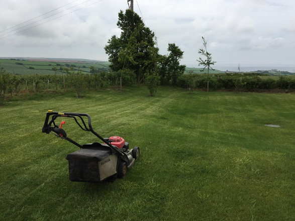 General garden maintenance , Thurlestone Devon.