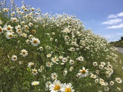 wild meadow.JPG