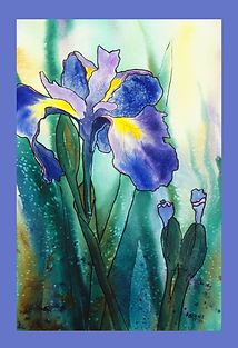 Lavender Blue Iris.jpg