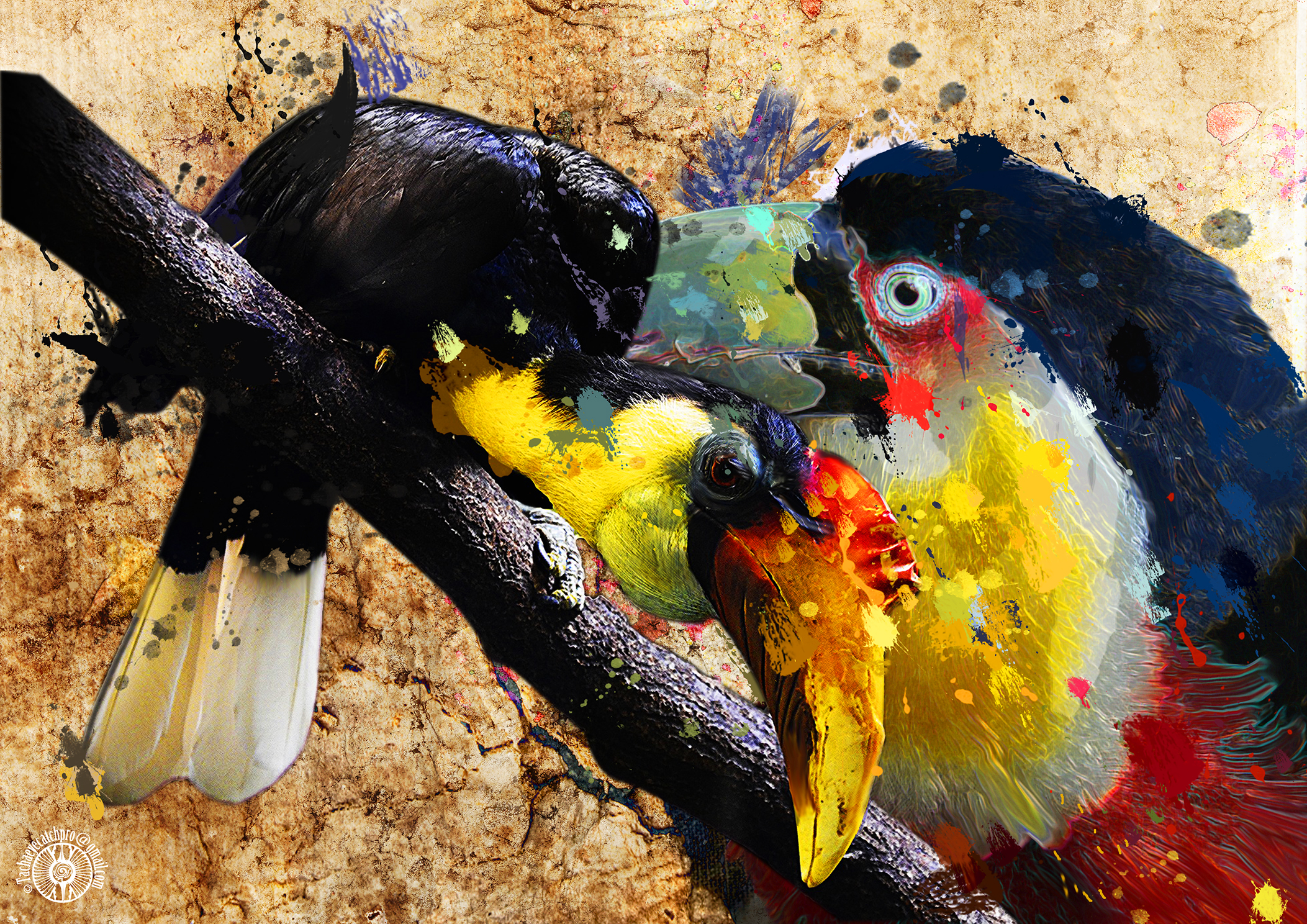 hombrill et toucan paint