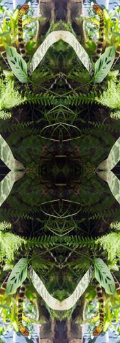 Jungle serie II40..jpg