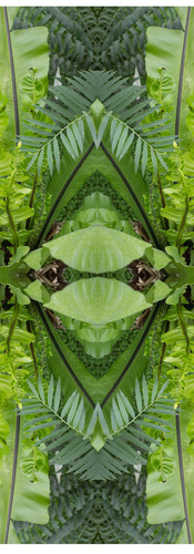 Jungle serie II14..jpg