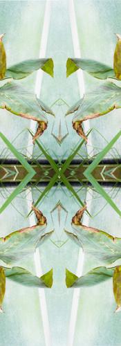 Jungle serie II30..jpg