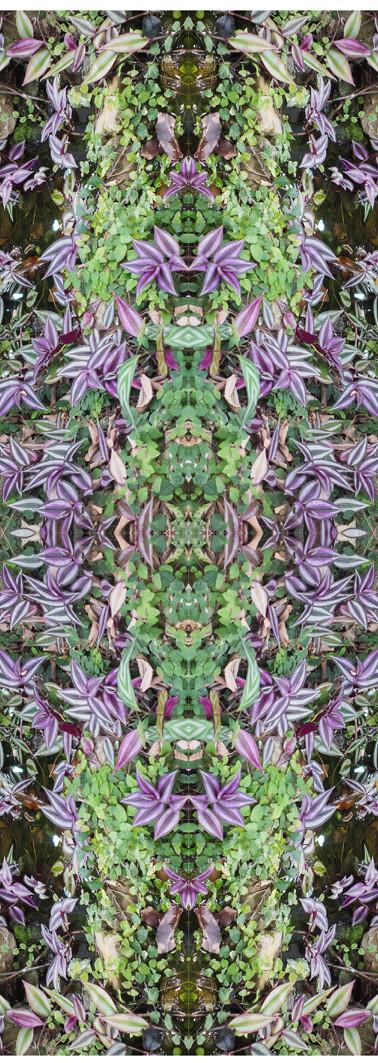 Jungle serie II44..jpg