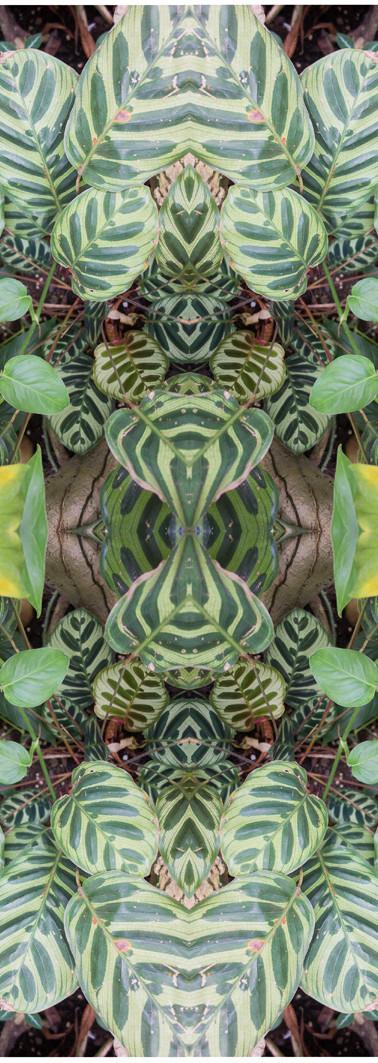 Jungle serie II16..jpg