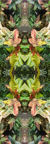 Jungle serie II33..jpg