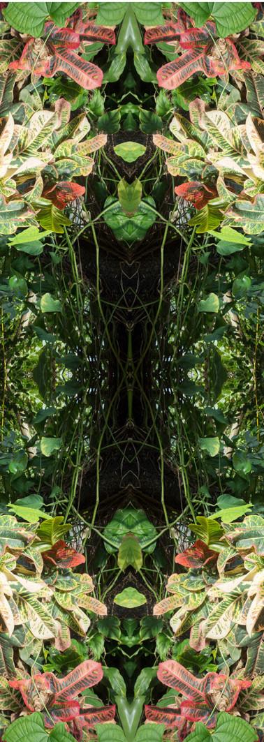 Jungle serie II31..jpg