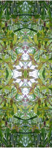 Jungle serie II20..jpg
