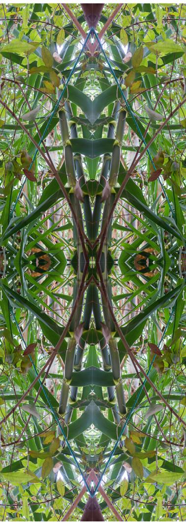 Jungle serie II22..jpg