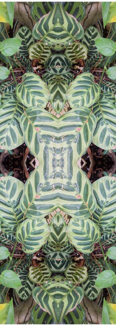 Jungle serie II17..jpg