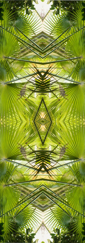 Jungle serie II13..jpg