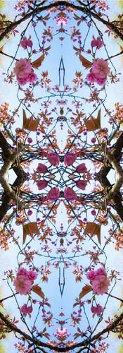 Spring Serie01..jpg