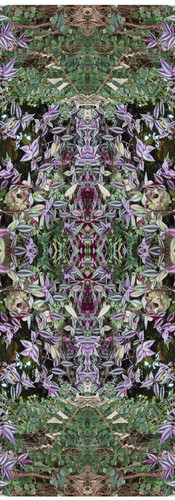 Jungle serie II42..jpg