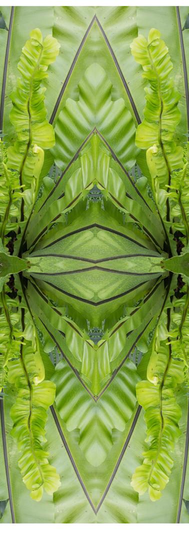 Jungle serie II15..jpg