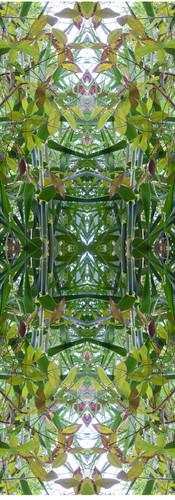 Jungle serie II21..jpg