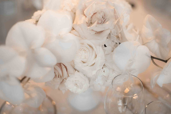 Wedding Orchids