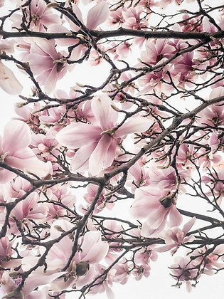 Magnolia Tree Detail
