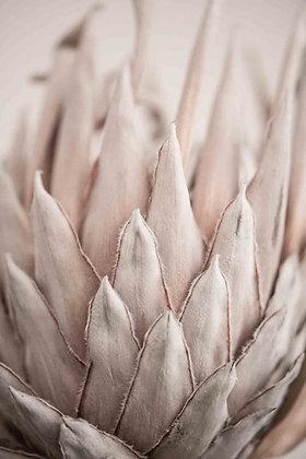Protea rose shades