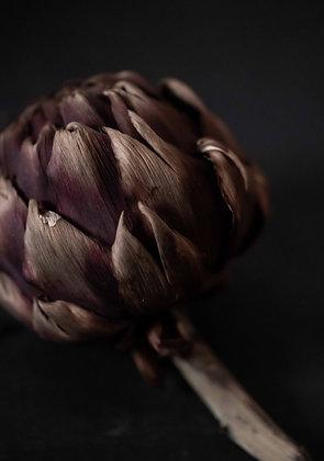 the beauty of artichoke
