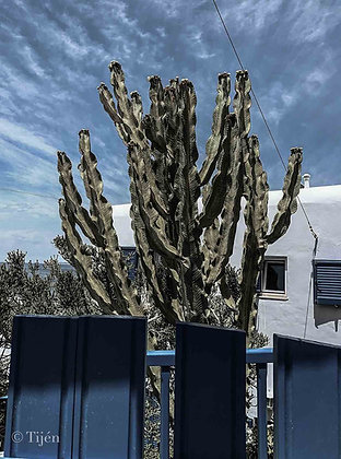 mykonos cactus meets white and blue