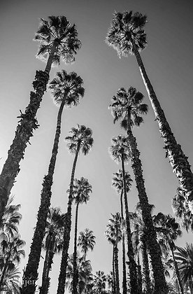 Palm Tree Marrakech