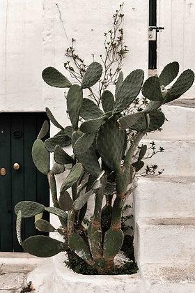 Ostuni cactus 2