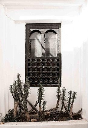 Agadir Window meets cactus
