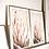 Thumbnail: The beauty of Protea