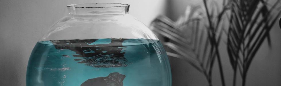 imagemanipulation_fishbowl.jpg