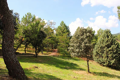 Pista Americana multiaventura instalaciones Área Medioambiental El Gurugú CINsierradeguadarrama