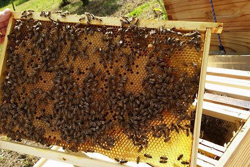Colonie d'abeilles buckfast été 2019