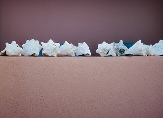bimini bahamas conch shells