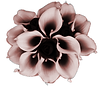Rose Gold Calla Lillies 2.png