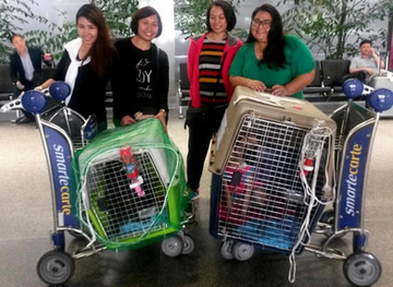 TRANSPORTING DOGS FROM THAILAND