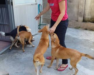 STRAYS IN THAILAND