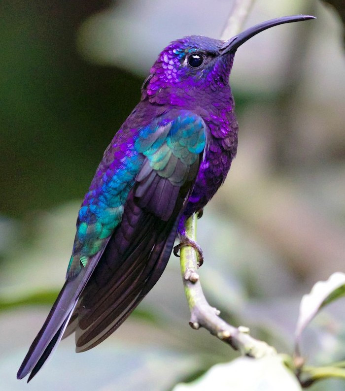 PRETTY HUMMING BIRD