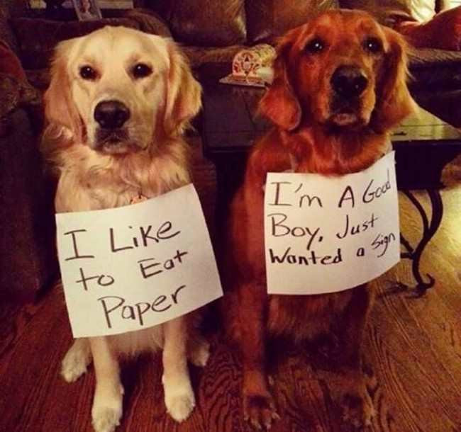 DOGS WITH SIGNS