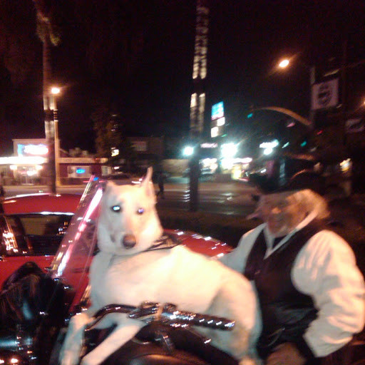 WHITE DOG ON BIKE