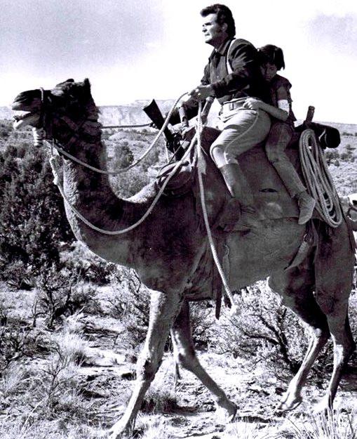 JAMES GARNER RIDING CAMEL