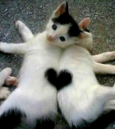 KITTEN HEARTS
