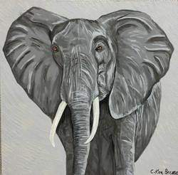 z Elephant