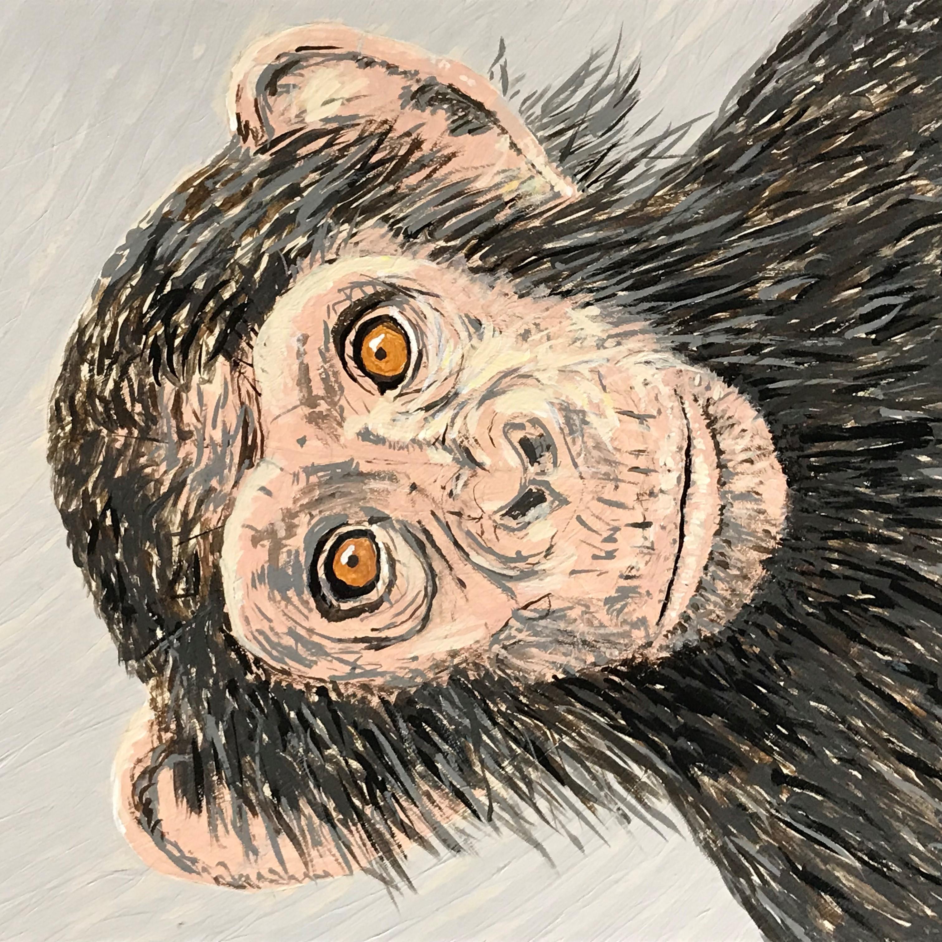 z Chimp